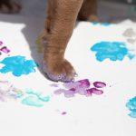 "GRASP Presents ""Painted Paws"" Fundraiser in October"